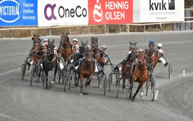 Lager ny unghestserie