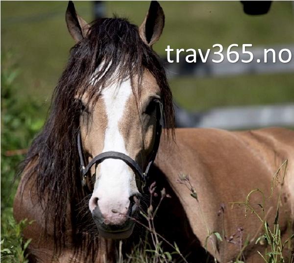 trav365.no