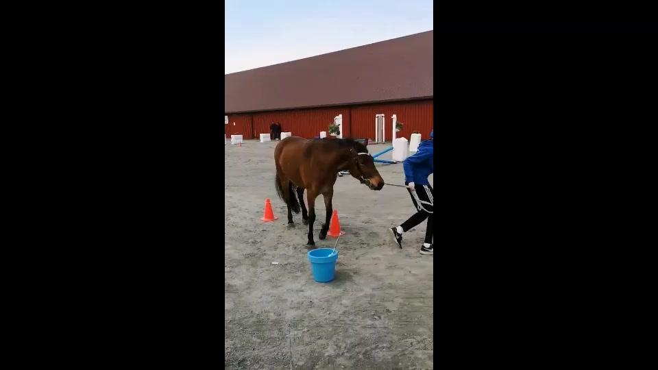 Ponni agility